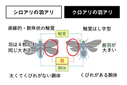 違い の 羽 と シロアリ アリ