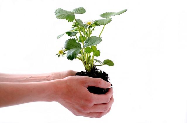 plant-164500_640