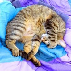 夏から秋の住まいのお手入れ!家庭でできるベッドや布団の寝具をダニから守るためのお掃除方法の画像