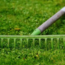 プロに頼んでみよう、庭のお手入れ。植木業者選びのポイントは?の画像