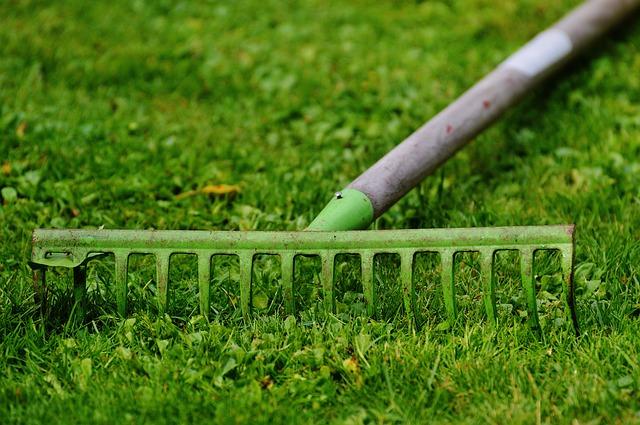プロに頼んでみよう、庭のお手入れ。植木業者選びのポイントは?