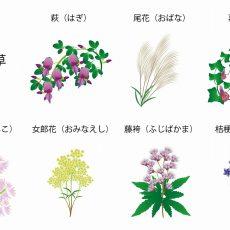 秋の野花を楽しむ!「秋の七草」を見つけよう!の画像