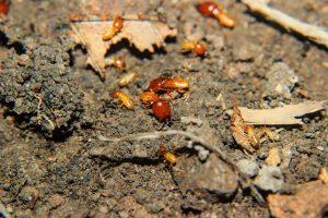 白蟻 お家被害